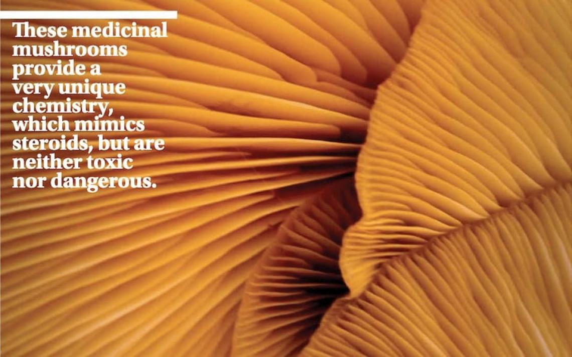 Medicinal mushrooms with quote